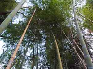 竹を切り出して流しそうめんを楽しむことなんてことも。これぞ自宅に竹林があるからこその醍醐味。