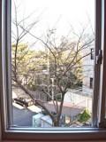 窓いっぱいに広がる桜の木。開花の頃が楽しみになる。  湘南美女不動産 - 片瀬東映 - 間取り図