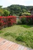 縁側から見る庭の眺め