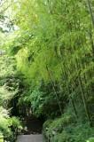 バス通りからはこんな竹林の階段を通って。