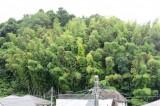 暮らしのそばに豊かな自然、これぞ鎌倉の醍醐味。