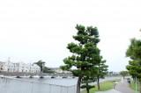 松の木にボート、なんだか湘南という感じ。