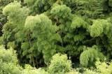 竹林が見えて和の心を感じられる!?