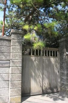 純日本風の松の木が植わっている