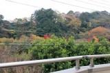 バルコニーからの眺め。自然がいっぱい!