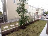庭には芝生とシンボルツリー。